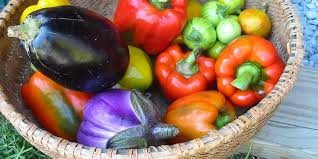 Produce donations during summer months